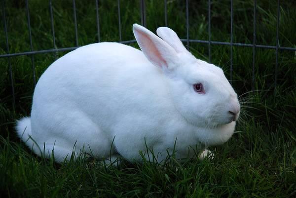 흰 토끼는 발리에