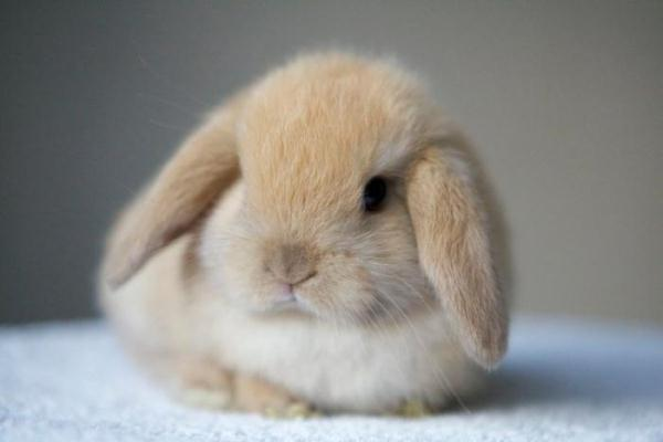 장식 토끼
