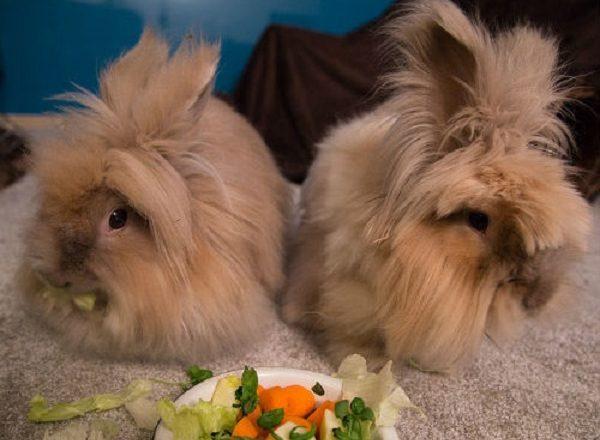 토끼에게 먹일 것