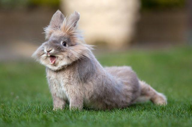 토끼의 비염 : 증상, 치료 및 예방