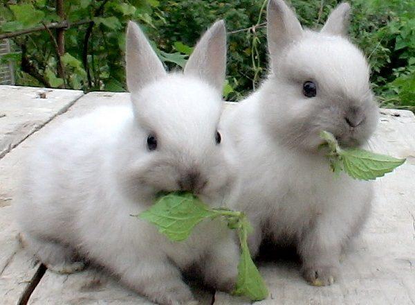 토끼에게 먹이를주는 것