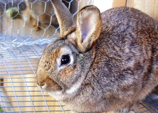 토끼의 설사