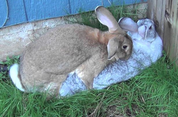 토끼 케이스