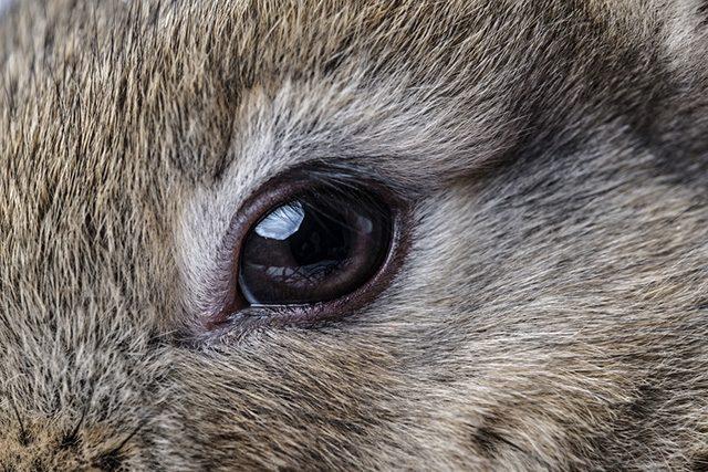 토끼 안과 질환
