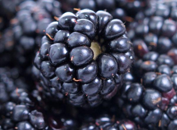 블랙 베리, 의학 및 조리법의 조성, 유용한 특성 및 금기