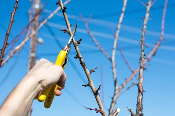 전정 정리 (pruning pruning) : 언제 어떻게해야 하는가?