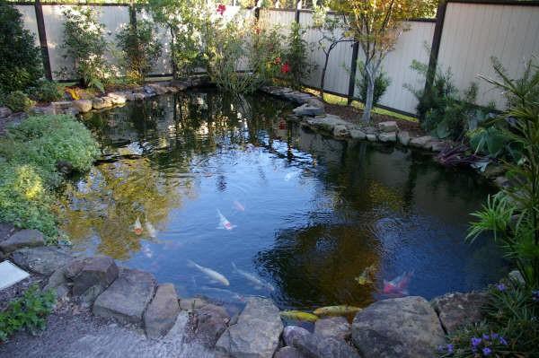 물고기 연못
