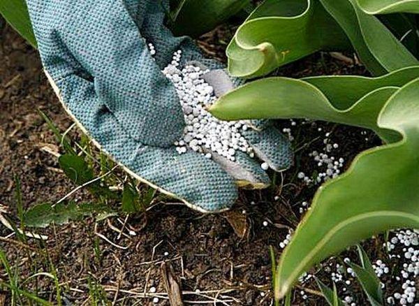 식물 용 질소 비료