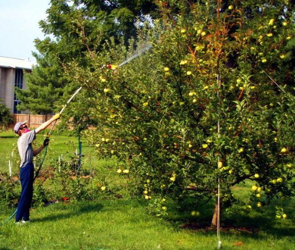 과일 나무 처리 조건