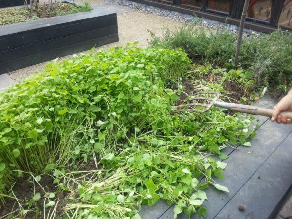 정원의 siderata