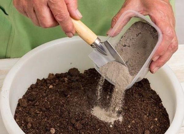 애쉬는 흙과 혼합되어 나무 주위에 흩어질 수 있습니다.