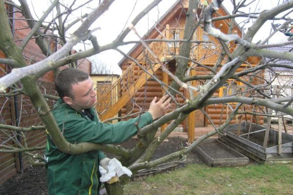 나무를 강화하는 인산염 비료