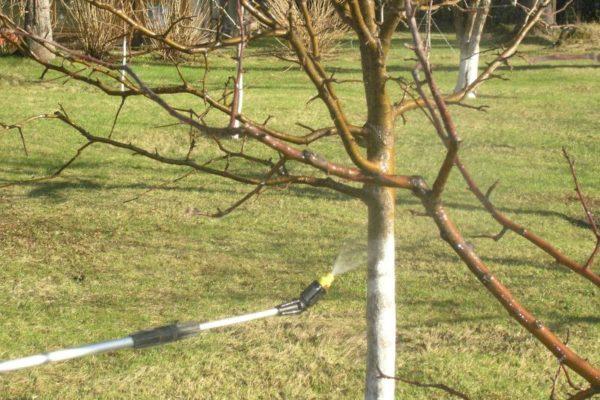 나무 이외에도 인접한 지역을 분사하는 것이 바람직합니다.