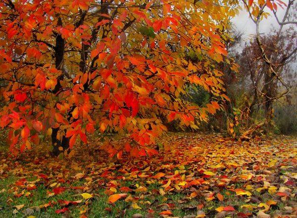 가을의 벚꽃 탑 드레싱