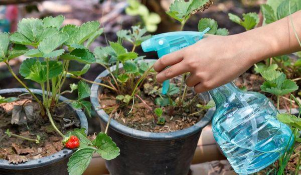 식물 용 황산 마그네슘의 사용