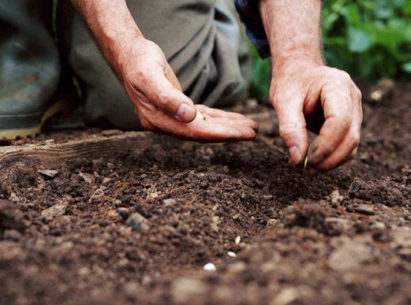 파종을위한 씨앗 준비