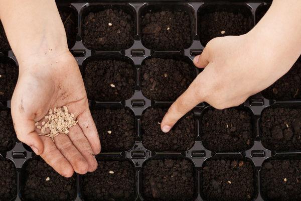 원하는 경우 씨앗을 분리기 용기에 뿌릴 수 있습니다
