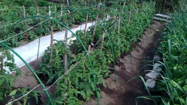 토마토와 딸기