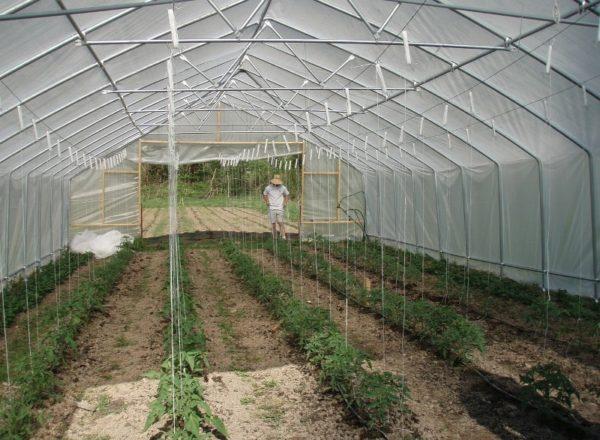 토마토 재배 조건